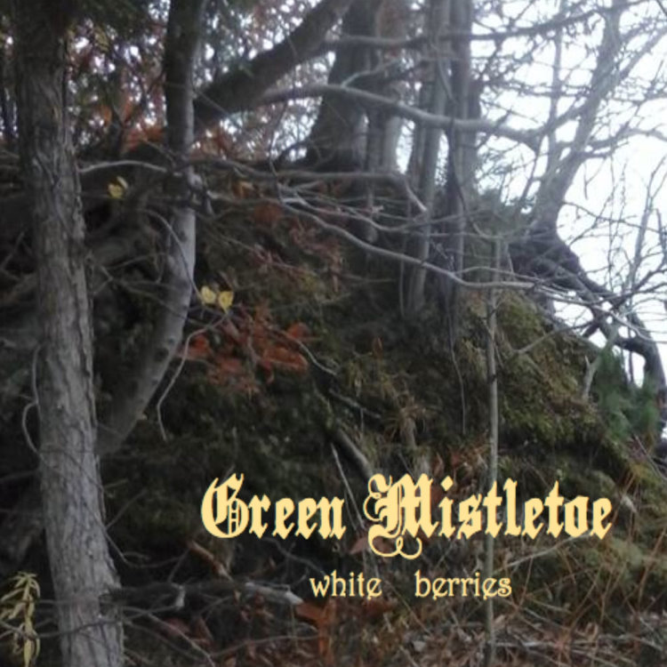 Green Mistletoe - White Berries